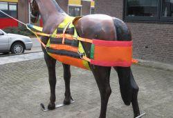 Paardenbroek